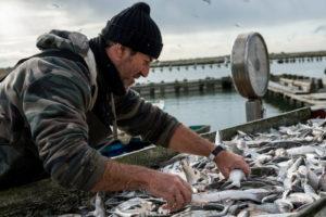 """Bando Azione 3.A1. """"Sostegno ad iniziative di pescaturismo, ittiturismo, acquiturismo e attività connesse"""""""