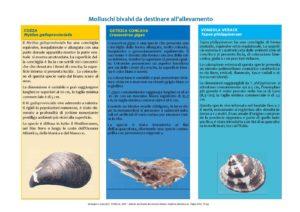Approvvigionamento di novellame di molluschi bivalvi da destinare all'allevamento