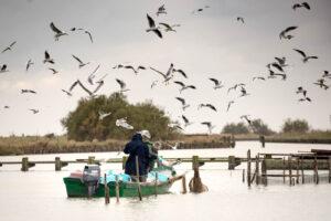 """Bando Azione 3.A.2 """"Diversificazione dei prodotti ittici e delle attività della pesca"""""""