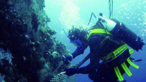 """domenica 27 giugno a Marina di Ravenna """"dal mare alla tavola: le opportunità di pesca sostenibile e consumo consapevole delle cozze"""""""